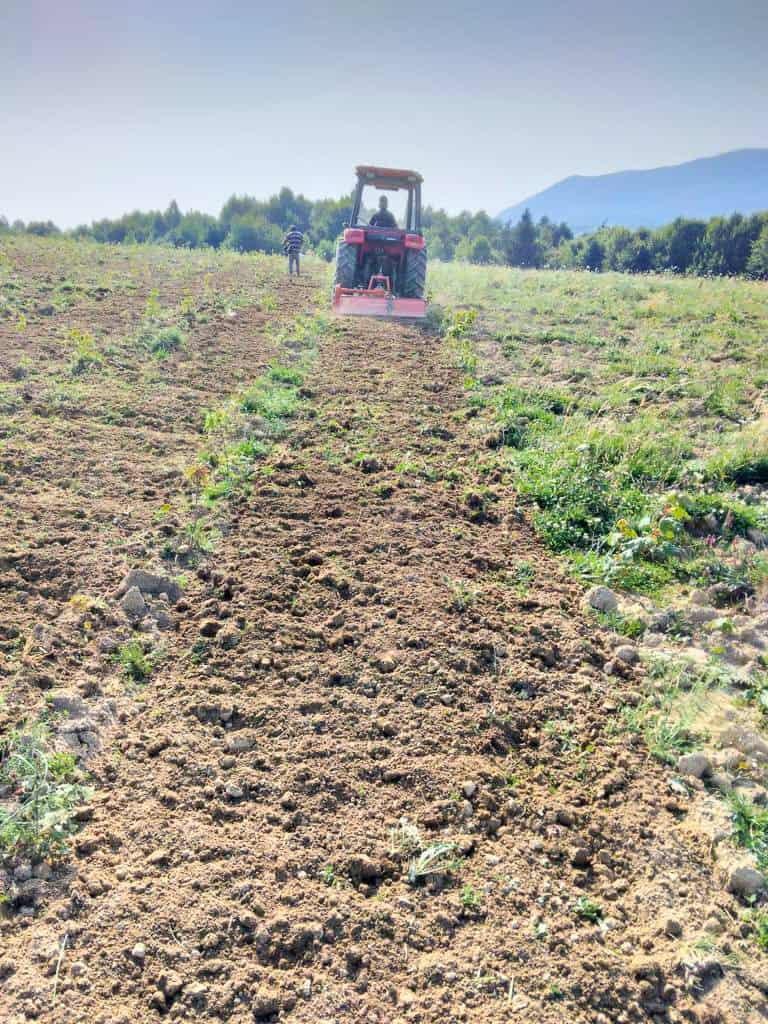 Dumbravita: lucrări de întreținere - mobilizarea solului